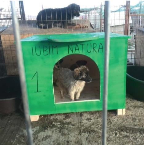 """""""Niciun câine fără cușcă"""" -construirea de cuști pentru câinii de la adăpostul public"""